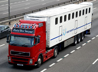 Duulop Horse Transport